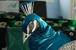 Lindsay McCaw designed and created a peacock puppet for the Carrie Morris Art Production collaboration with the Detroit Zoo.