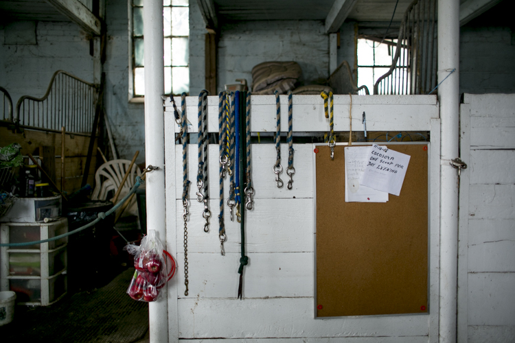 Leashes hung up inside the barn.