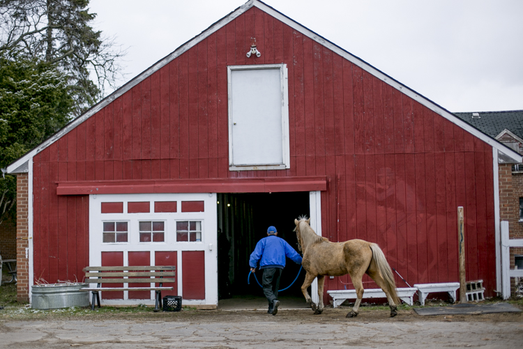 James Mills brings a horse into the barn.