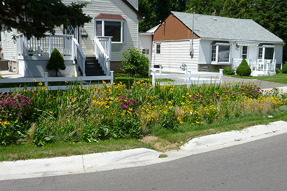 This rain garden in the Lakeview neighborhood of Mississauga, Ontario absorbs stormwater and reduces landscape irrigation.