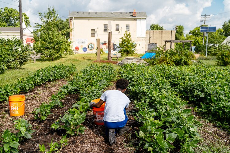 A youth volunteer from the city works at the Oakland Avenue Urban Farm earlier this summer.