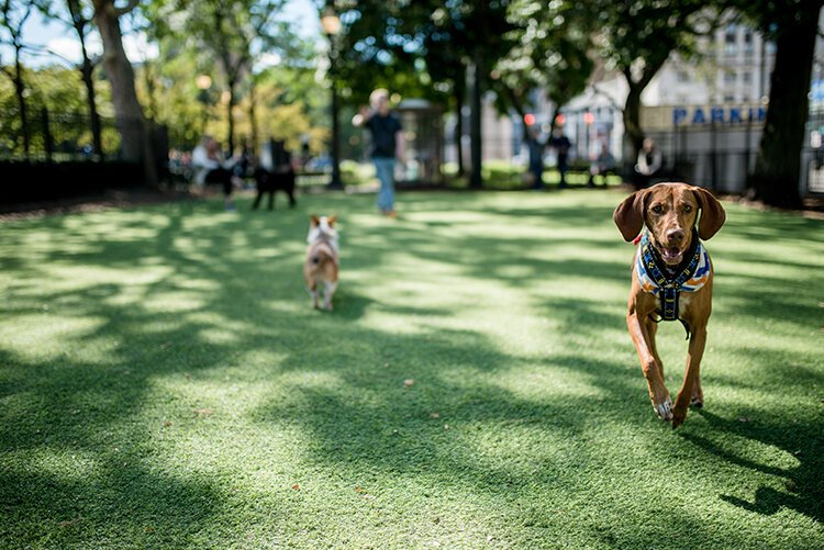The Downtown Detroit Partnership aims to bring an off-leash dog park to Capitol Park in downtown Detroit.