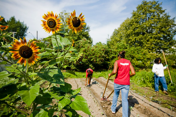 Volunteer Wednesdays at Earthworks Urban Farm