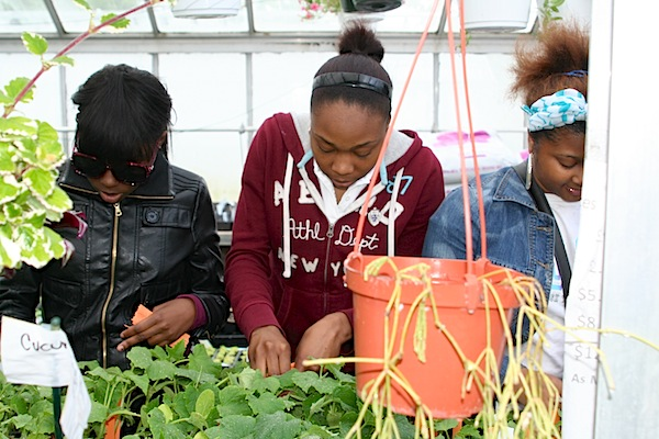 Golightly Agriscience students prepare plants for last month's annual plant sale