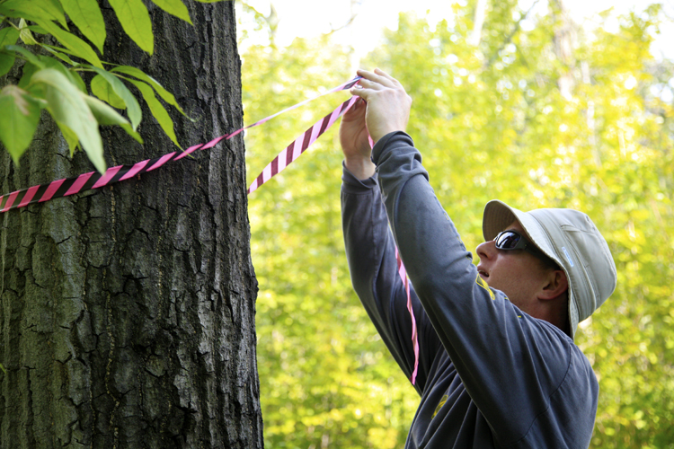 Belle Isle: Ethan Stanton tags a tree infected with Oak Wilt. Photo by Imad Hassan.