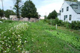 A vacant lot-turned-garden in Detroit