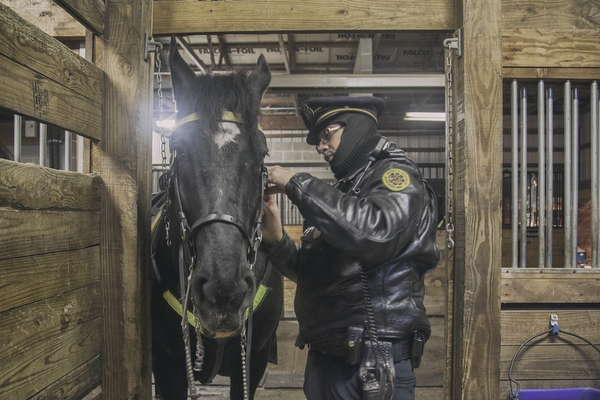 Officer J Washington II fastens a bridle on Big Babby for their University District patrol