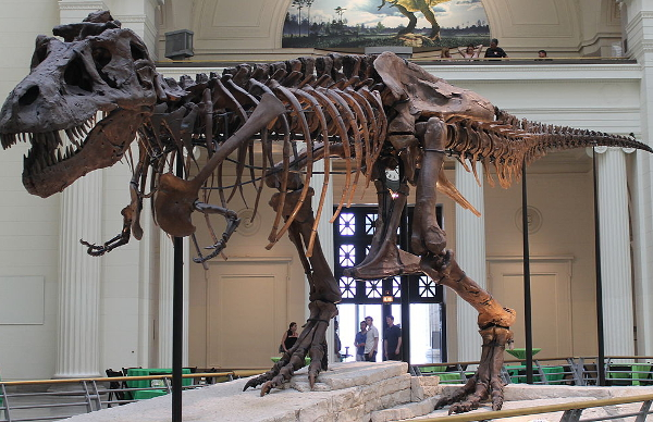 Sue, the world's largest and most complete T. rex, is coming to the Michigan Science Center