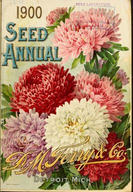 By D.M. Ferry & Co.; Henry G. Gilbert Nursery and Seed Trade Catalog Collection. [CC BY 2.0 (http://creativecommons.org/licenses/by/2.0) or Public domain], via Wikimedia Commons