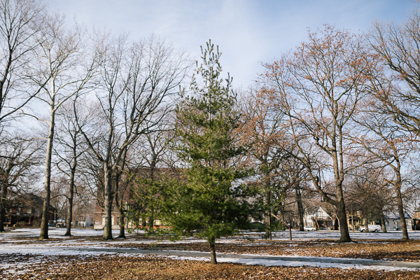 Tree-filled Clark Park