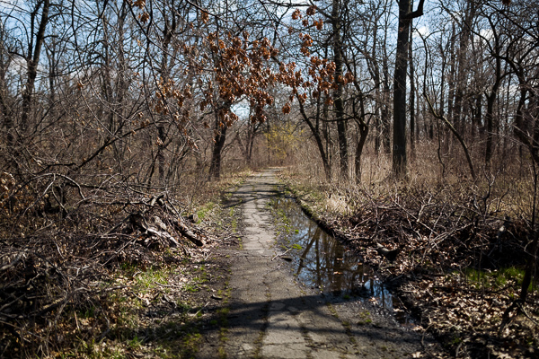 Nature trail in Belle Isle