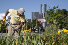 Greening of Detroit worker (photo from 2014)