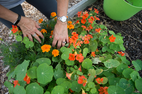 People for Palmer Park president Rochelle Lento tends to marigolds and nasturtiums at the park's community garden