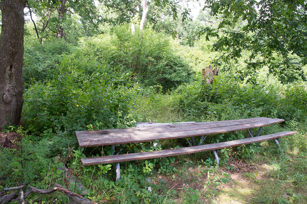 An overgrown picnic table in one of the wooded areas of Palmer Park