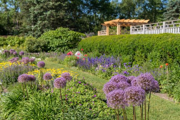 Perennial Garden At Matthaei Botanical Gardens