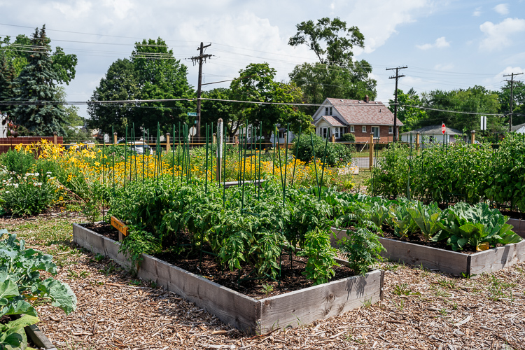 Raised beds at In Memory Of…Community Garden