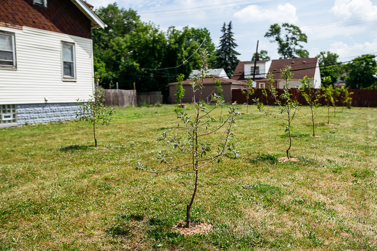 Sapling at a Warrendale orchard