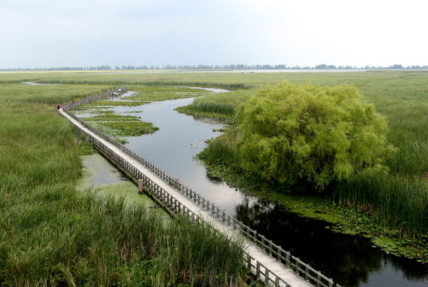Point Pelee Marsh by Andrea from Leamington, Ontario , Canada - CC BY