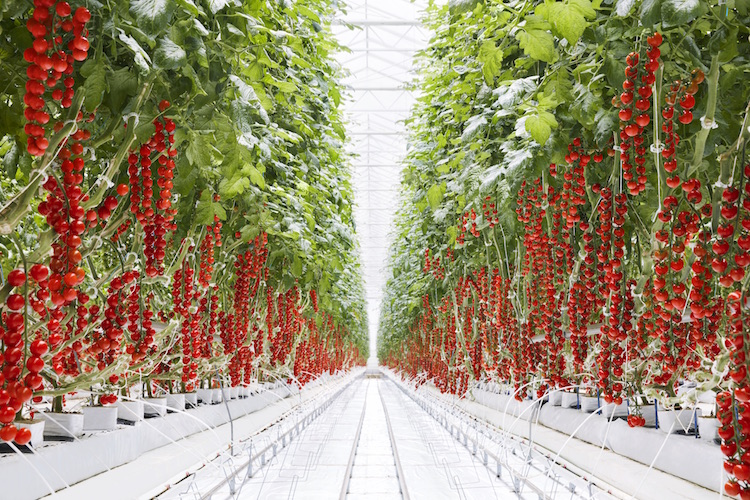 Greenhouse to grocery: Stocking stores with year-round Michigan produce